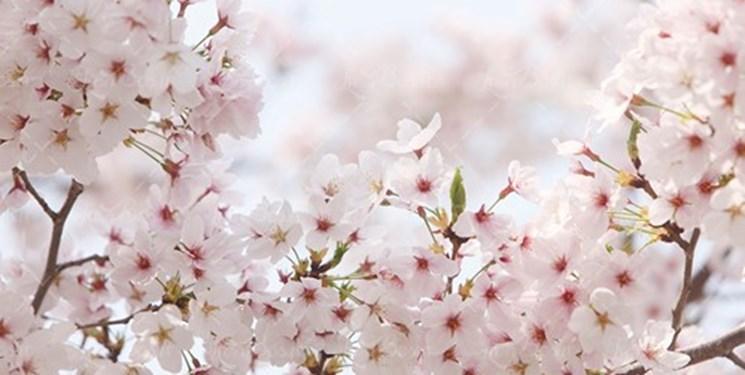 بهار در کلام فارسی سرایان تاجیک؛ چه زیبا هست و برنا روی نوروز